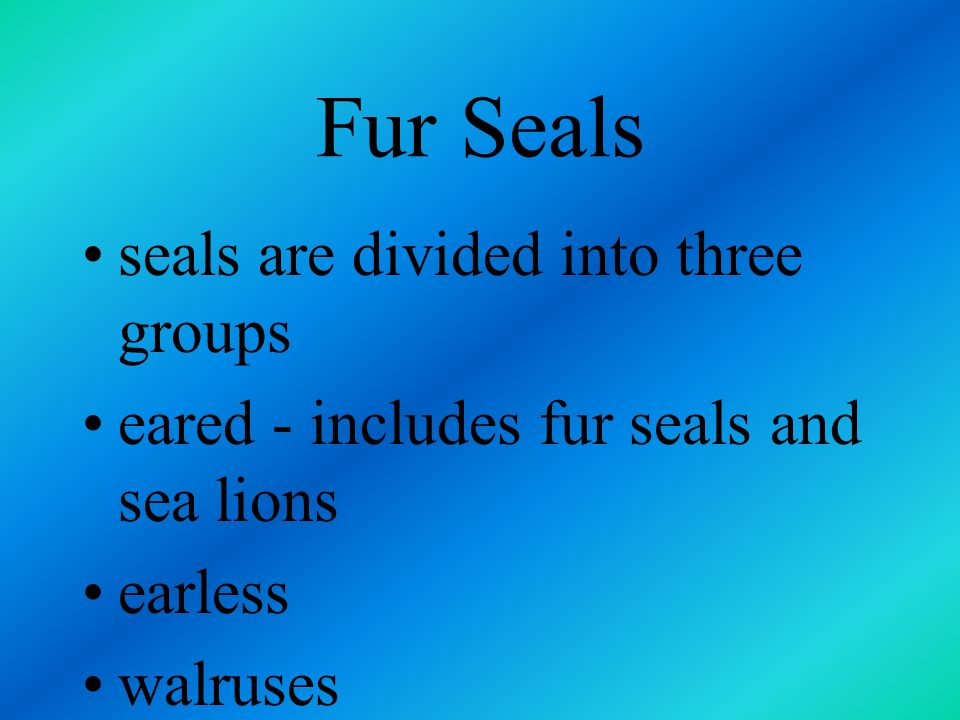 Fur Seals seals are divided into three groups
