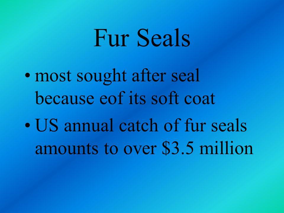Fur Seals most sought after seal because eof its soft coat