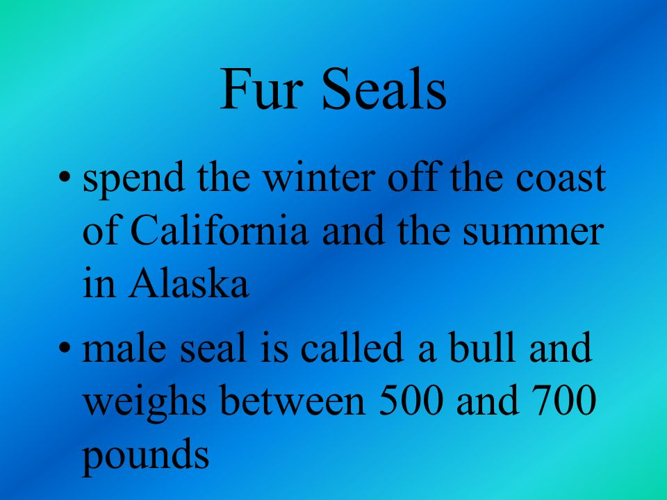 Fur Seals spend the winter off the coast of California and the summer in Alaska.