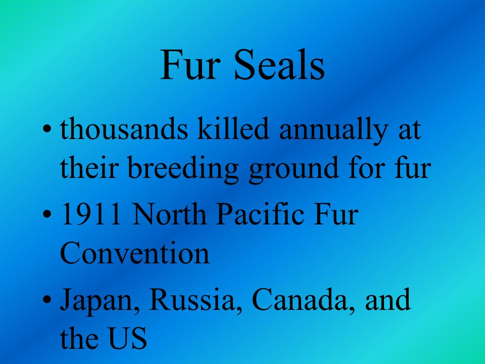 Fur Seals thousands killed annually at their breeding ground for fur