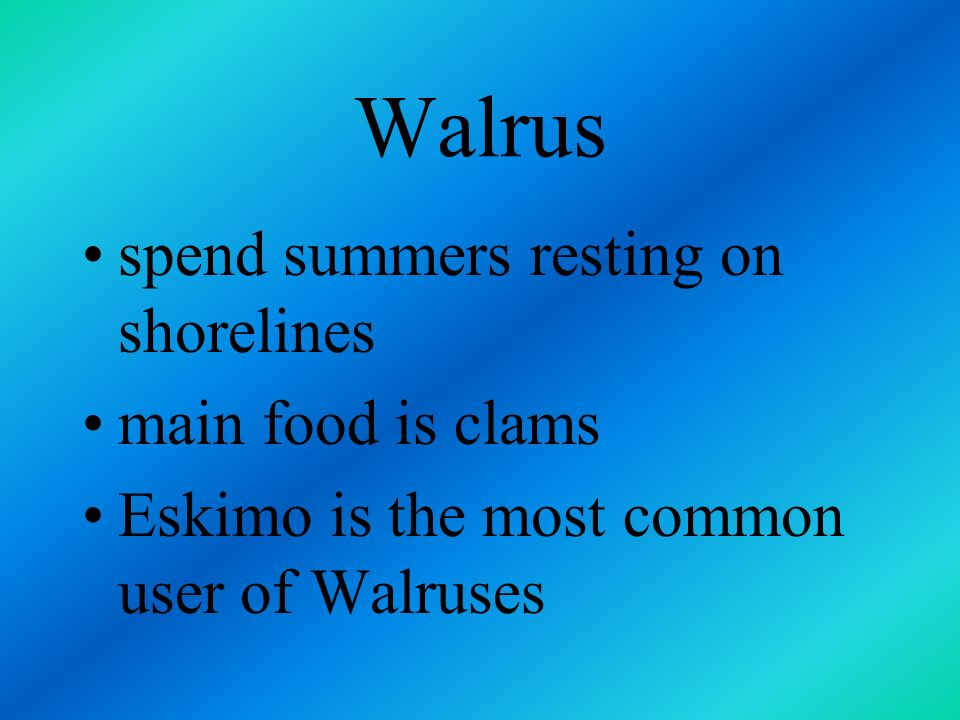 Walrus spend summers resting on shorelines main food is clams