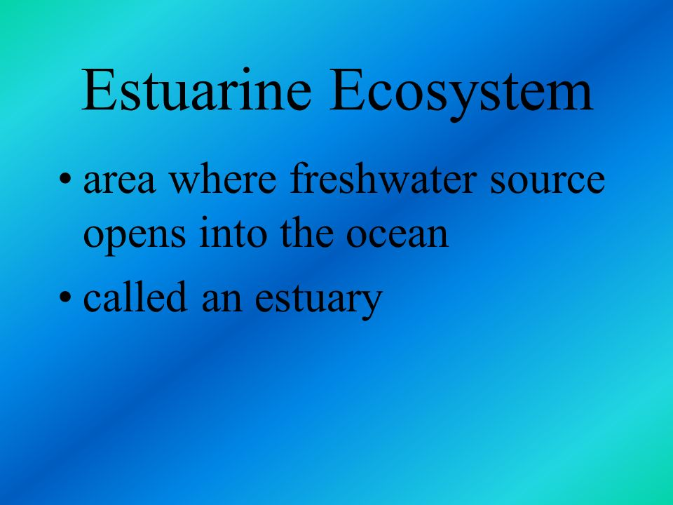 Estuarine Ecosystem area where freshwater source opens into the ocean