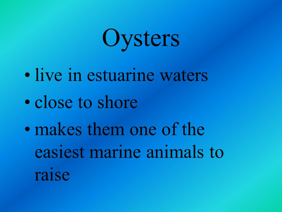 Oysters live in estuarine waters close to shore
