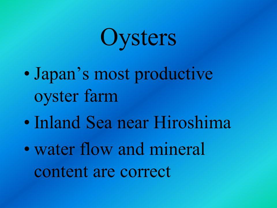 Oysters Japan's most productive oyster farm Inland Sea near Hiroshima