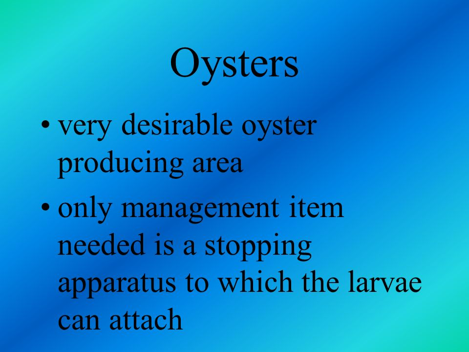 Oysters very desirable oyster producing area