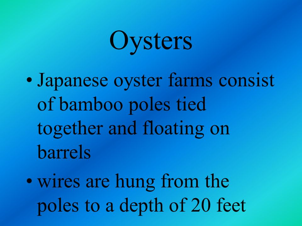 Oysters Japanese oyster farms consist of bamboo poles tied together and floating on barrels.