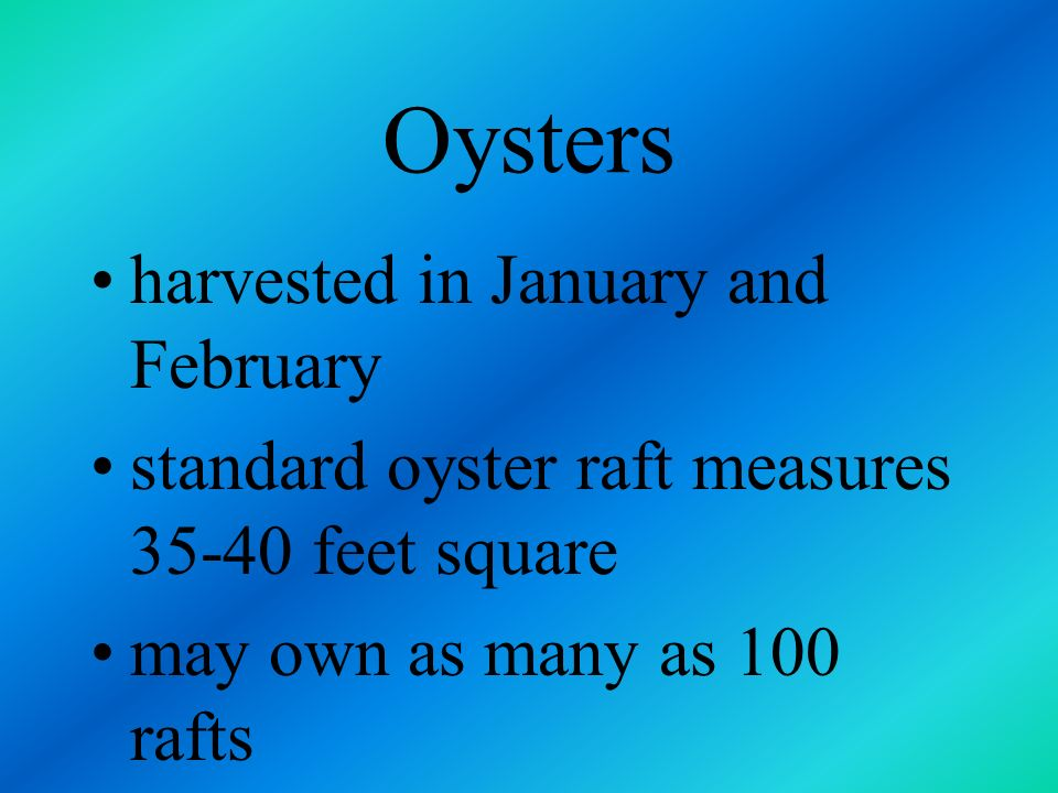 Oysters harvested in January and February