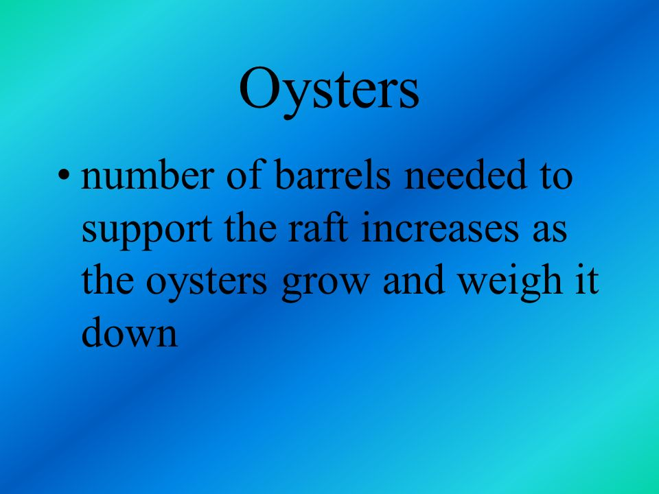 Oysters number of barrels needed to support the raft increases as the oysters grow and weigh it down.