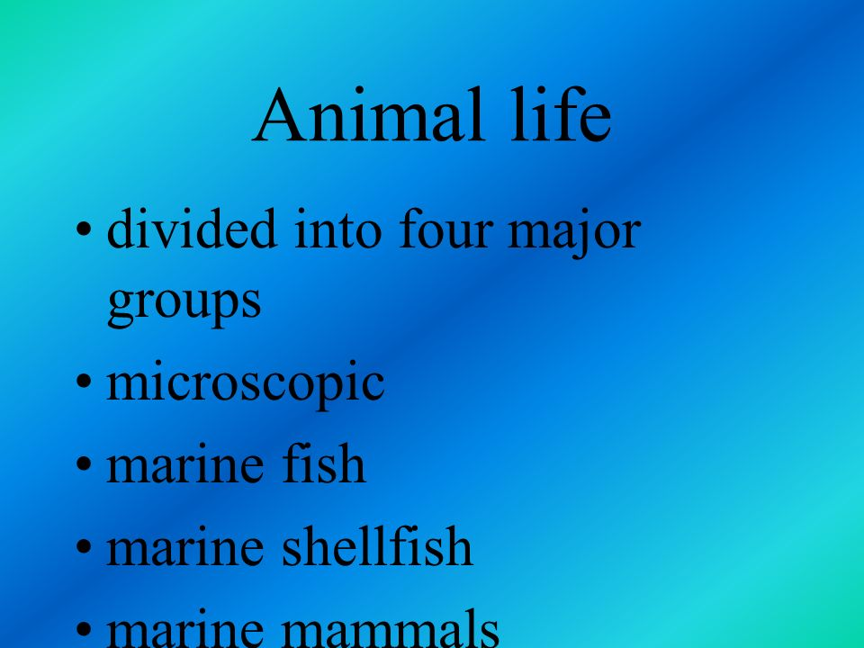 Animal life divided into four major groups microscopic marine fish