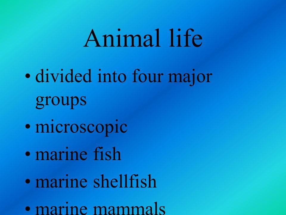 Animal life divided into four major groups microscopic marine fish
