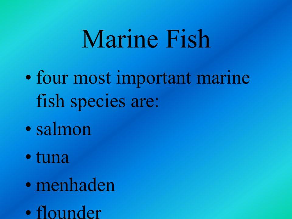 Marine Fish four most important marine fish species are: salmon tuna
