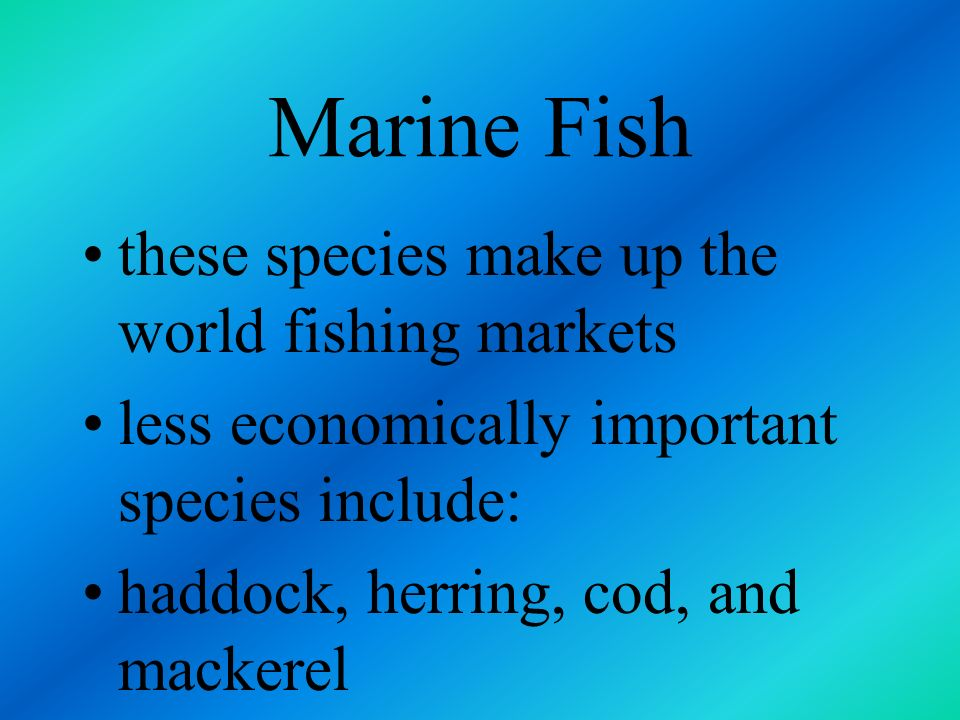 Marine Fish these species make up the world fishing markets