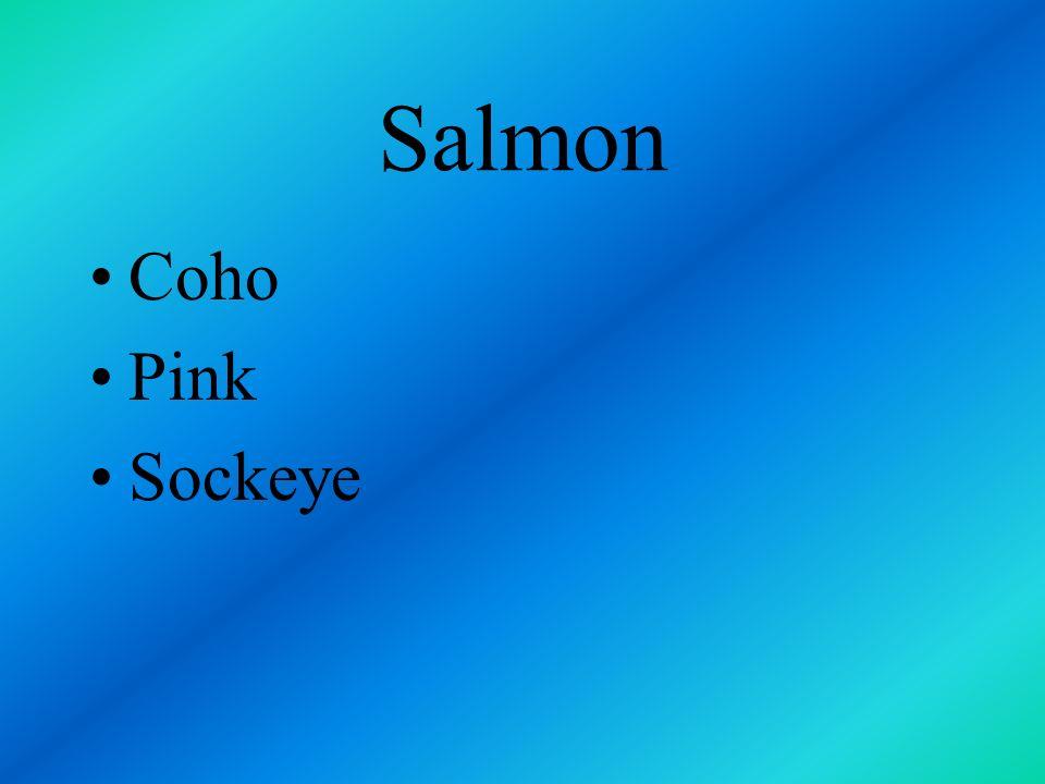 Salmon Coho Pink Sockeye