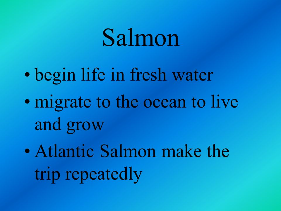 Salmon begin life in fresh water migrate to the ocean to live and grow
