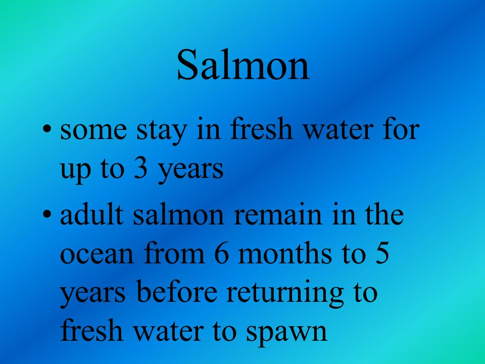 Salmon some stay in fresh water for up to 3 years