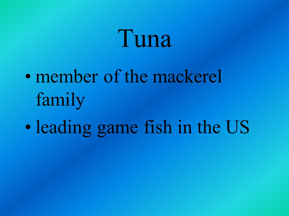 Tuna member of the mackerel family leading game fish in the US
