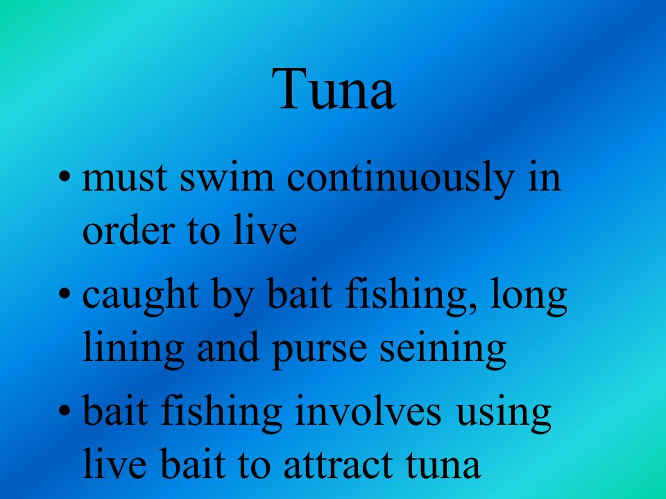 Tuna must swim continuously in order to live