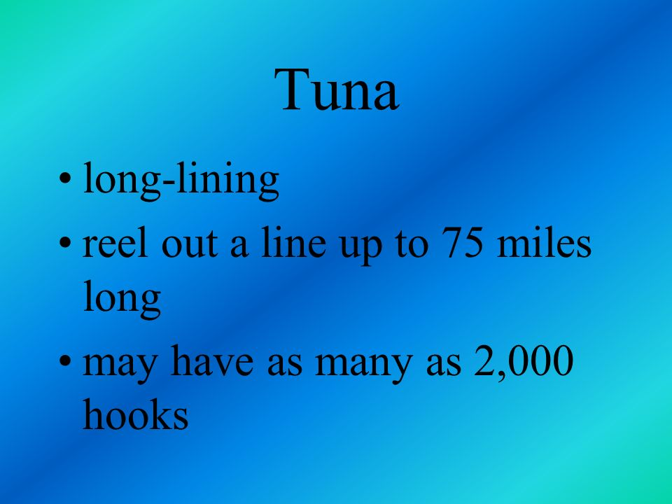 Tuna long-lining reel out a line up to 75 miles long
