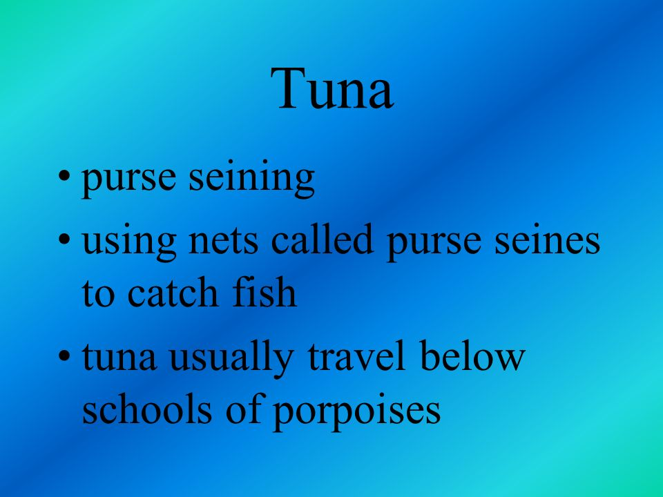 Tuna purse seining using nets called purse seines to catch fish