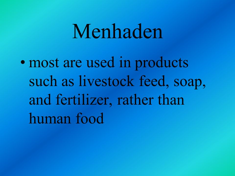 Menhaden most are used in products such as livestock feed, soap, and fertilizer, rather than human food.