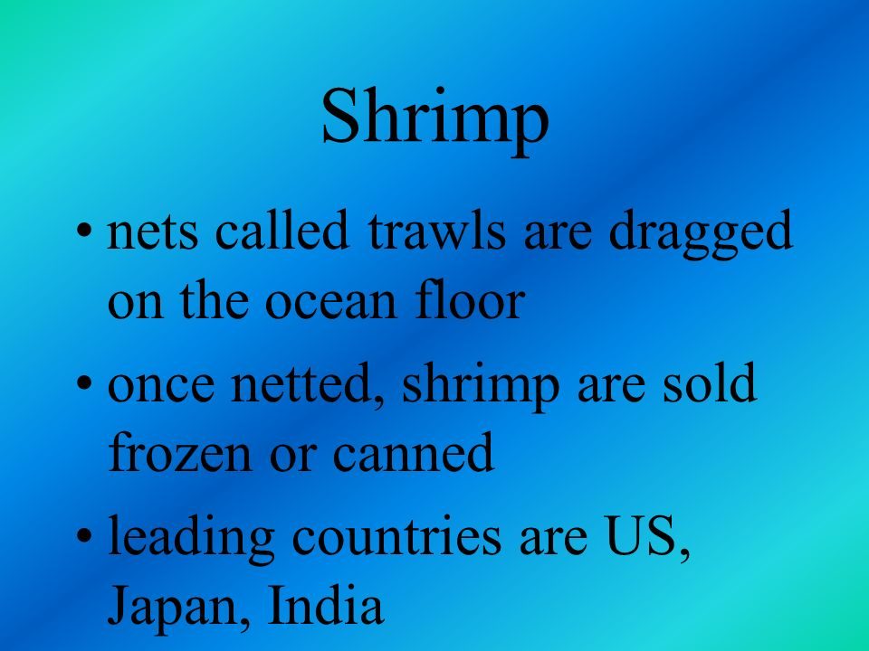Shrimp nets called trawls are dragged on the ocean floor