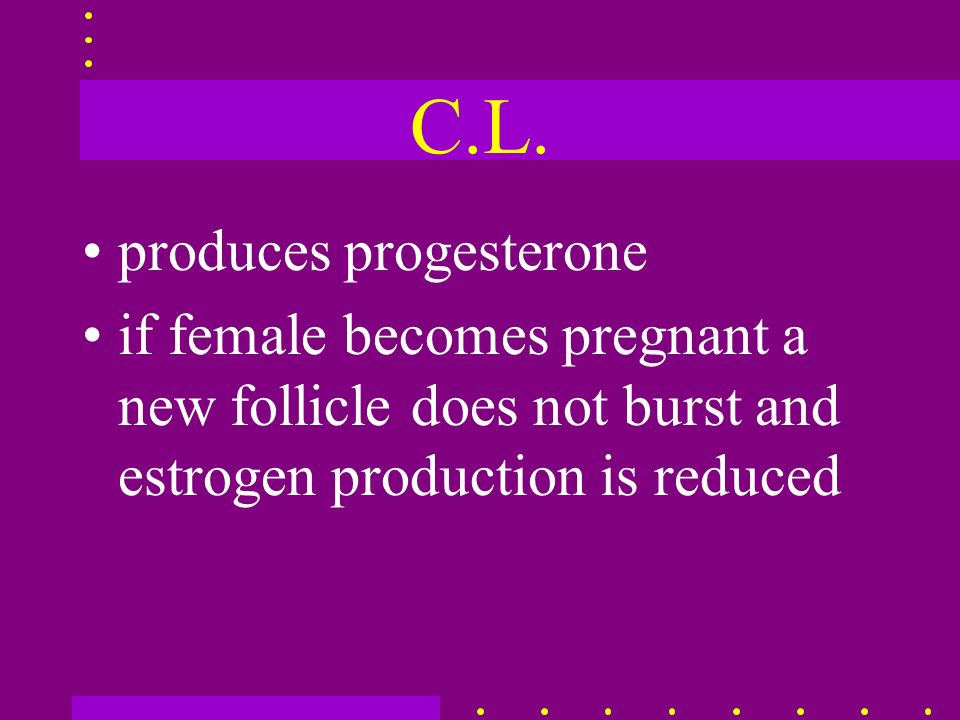 C.L. produces progesterone