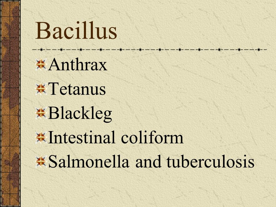 Bacillus Anthrax Tetanus Blackleg Intestinal coliform