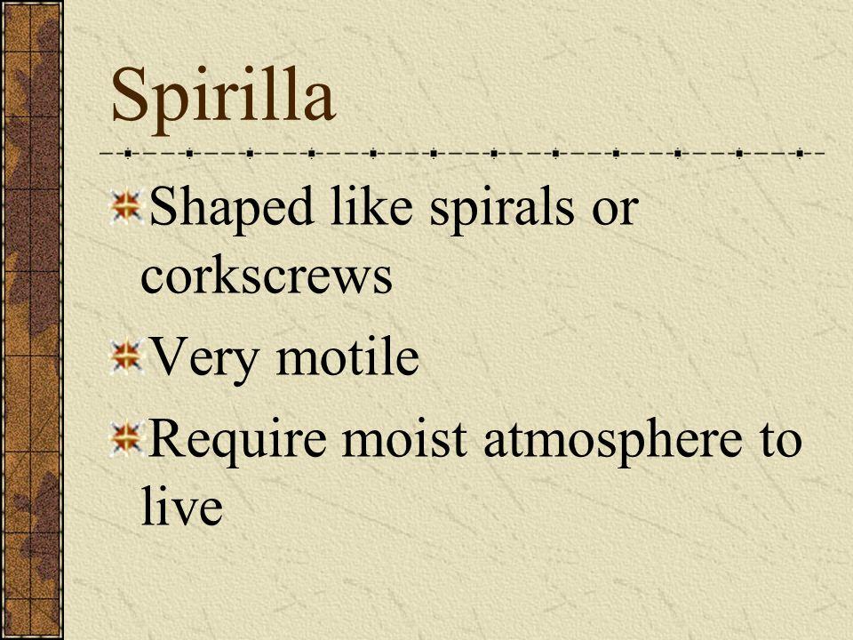 Spirilla Shaped like spirals or corkscrews Very motile