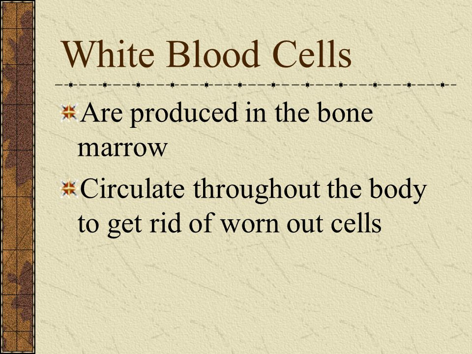 White Blood Cells Are produced in the bone marrow