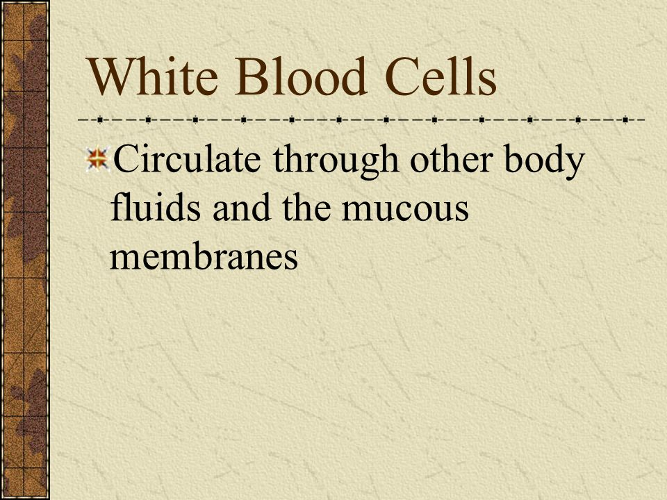 White Blood Cells Circulate through other body fluids and the mucous membranes