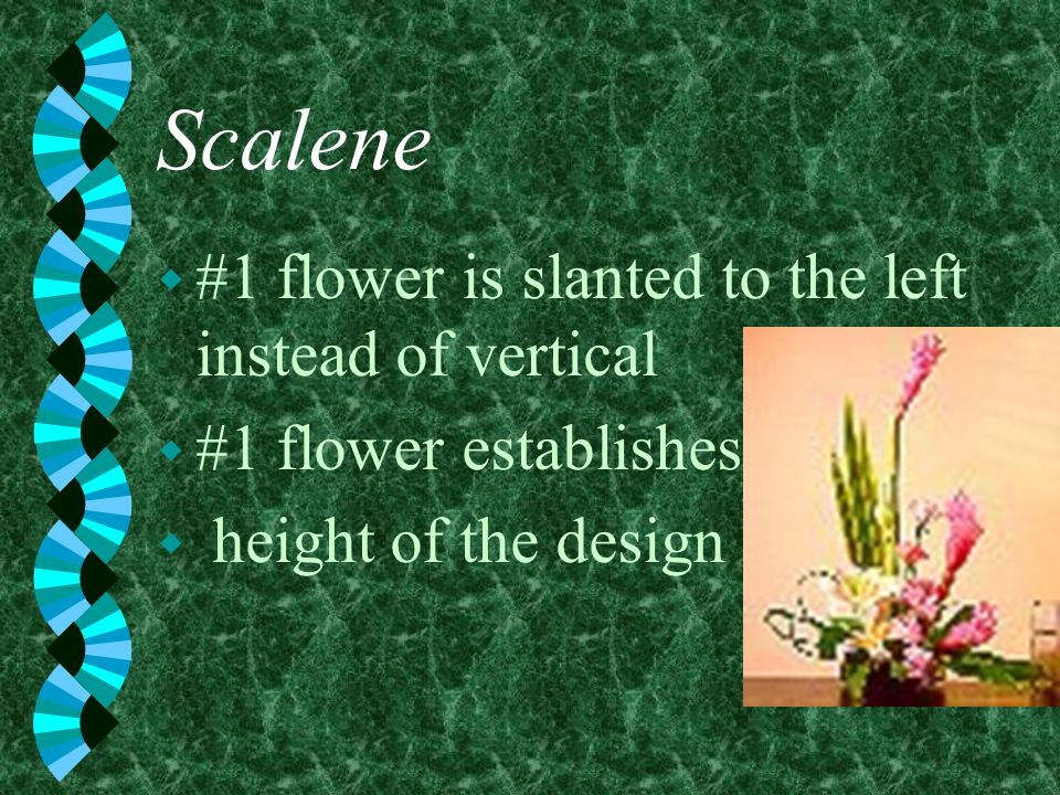 Scalene #1 flower is slanted to the left instead of vertical