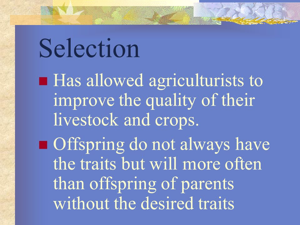 Selection Has allowed agriculturists to improve the quality of their livestock and crops.