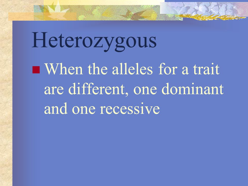 Heterozygous When the alleles for a trait are different, one dominant and one recessive