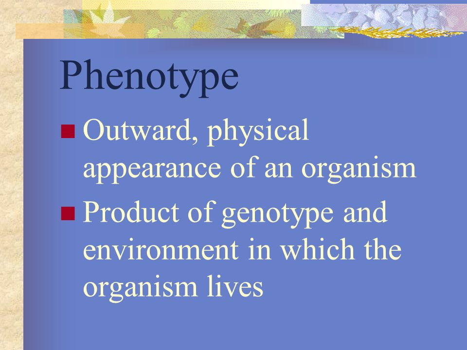 Phenotype Outward, physical appearance of an organism