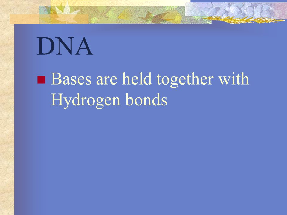 DNA Bases are held together with Hydrogen bonds