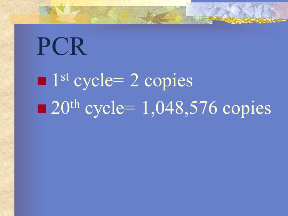 PCR 1st cycle= 2 copies 20th cycle= 1,048,576 copies