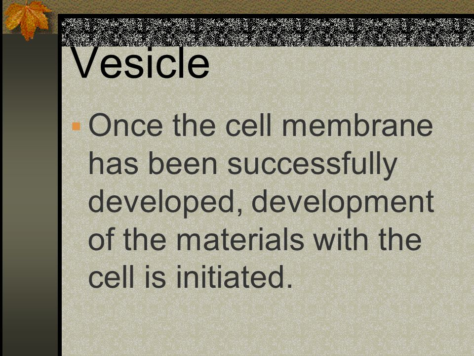 Vesicle Once the cell membrane has been successfully developed, development of the materials with the cell is initiated.