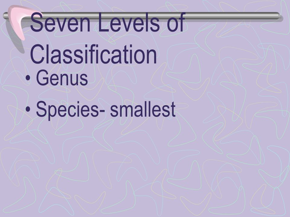 Seven Levels of Classification
