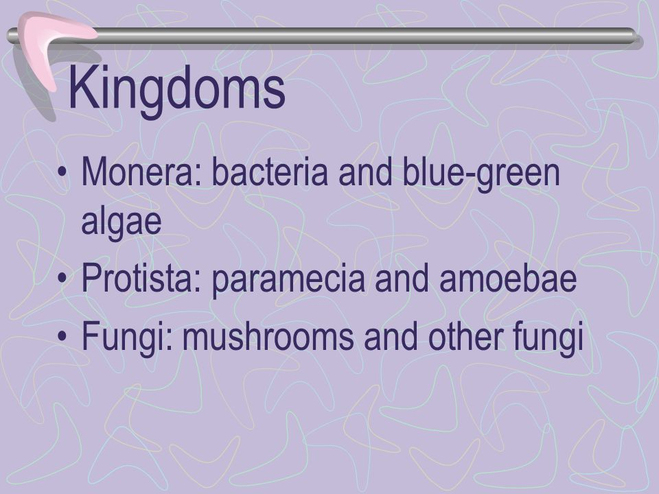 Kingdoms Monera: bacteria and blue-green algae