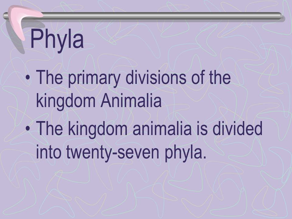 Phyla The primary divisions of the kingdom Animalia