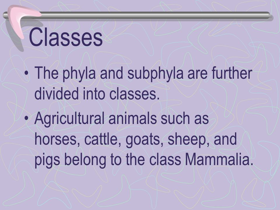 Classes The phyla and subphyla are further divided into classes.