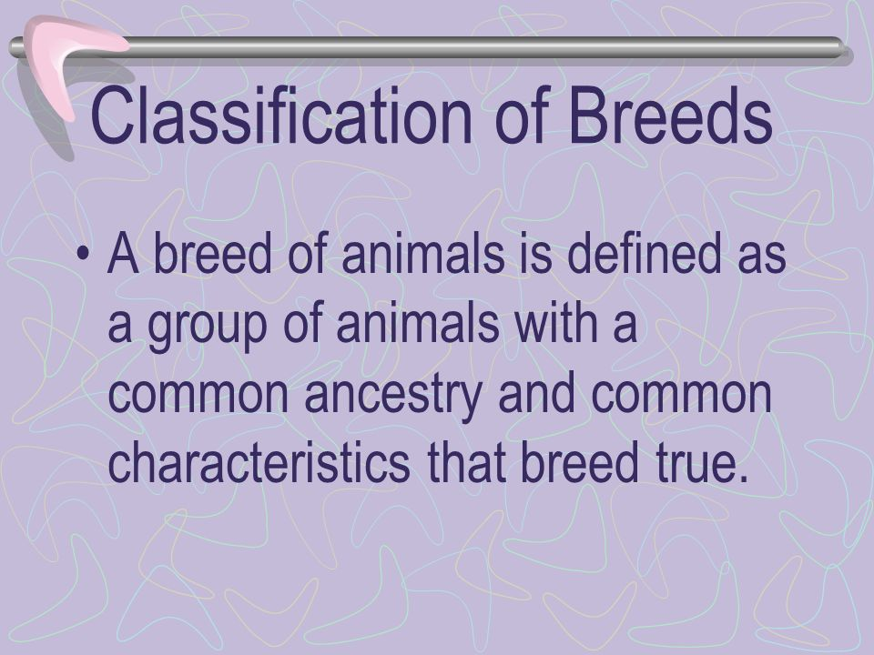 Classification of Breeds
