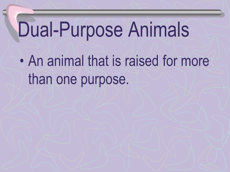 Dual-Purpose Animals An animal that is raised for more than one purpose.