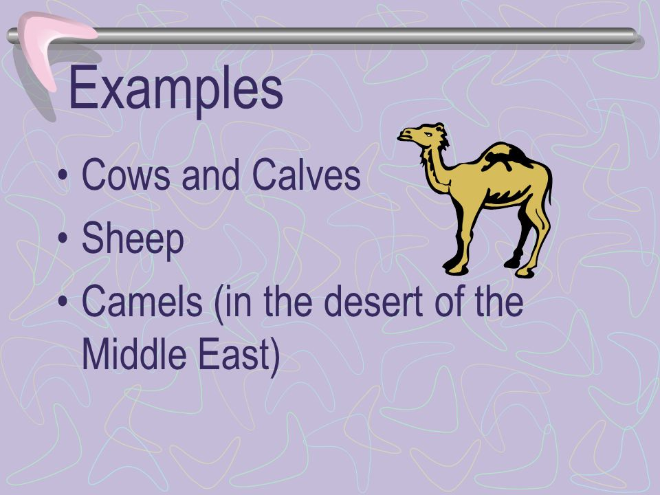 Examples Cows and Calves Sheep