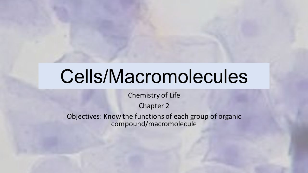 Chapter 12 3 rna and protein synthesis workbook answers