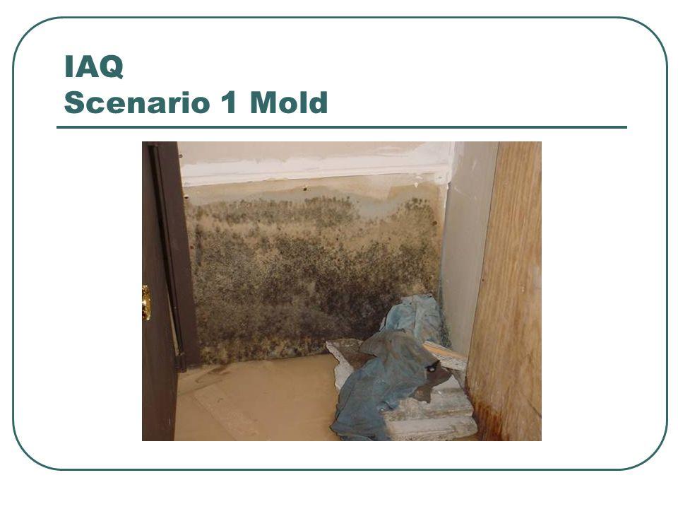 IAQ Scenario 1 Mold