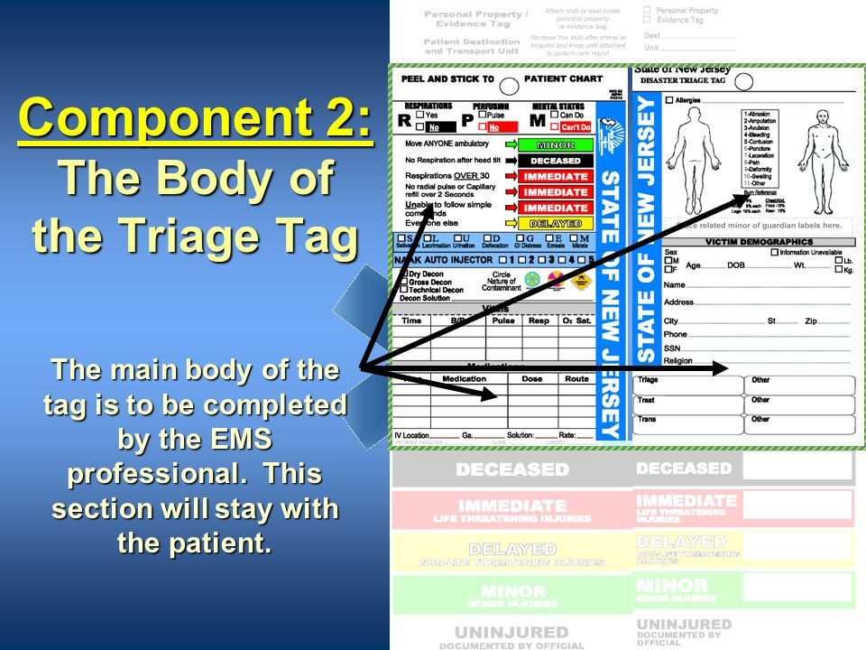 Component 2: The Body of the Triage Tag