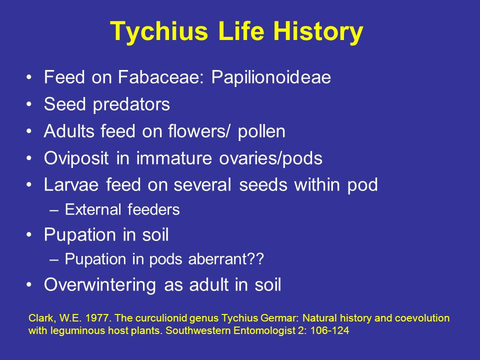 Tychius Life History Feed on Fabaceae: Papilionoideae Seed predators
