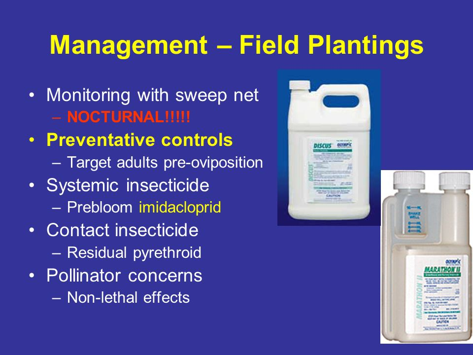 Management – Field Plantings