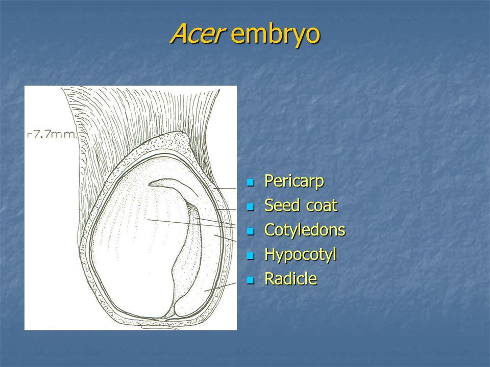 Acer embryo Pericarp Seed coat Cotyledons Hypocotyl Radicle